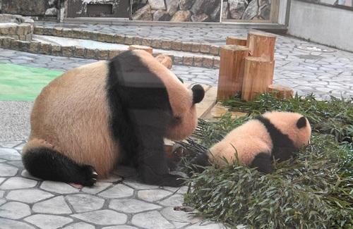 竹を食べたい良浜に邪険にされる結浜(9).jpg