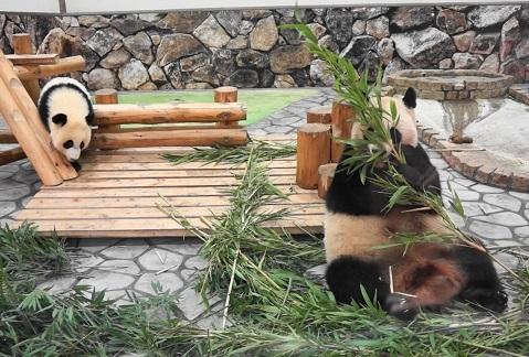結品から離れて竹を食べる良浜と、かまって欲しい結浜(13).jpg