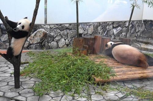 良浜にこねくり回される桜浜と、木から下りる桃浜(1).jpg
