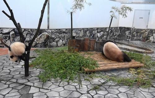 良浜にこねくり回される桜浜と、木から下りる桃浜(10).jpg