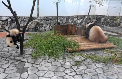 良浜にこねくり回される桜浜と、木から下りる桃浜(11).jpg
