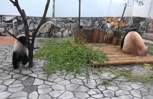 良浜にこねくり回される桜浜と、木から下りる桃浜(13).jpg