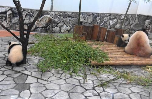 良浜にこねくり回される桜浜と、木から下りる桃浜(15).jpg