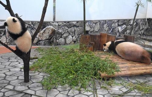 良浜にこねくり回される桜浜と、木から下りる桃浜(3).jpg