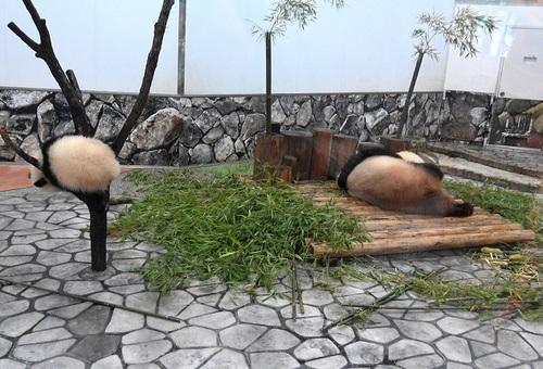 良浜にこねくり回される桜浜と、木から下りる桃浜(9).jpg
