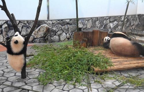 良浜に翻弄される桜浜と、木に登る桃浜(17).jpg