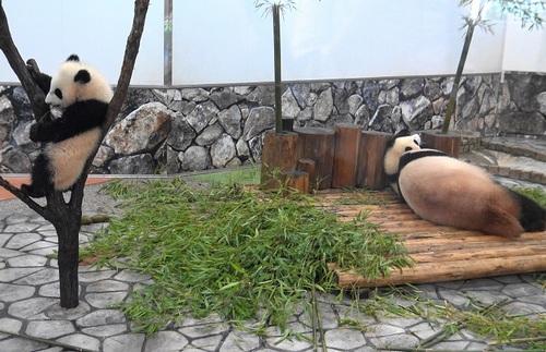 良浜に翻弄される桜浜と、木に登る桃浜(19).jpg