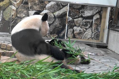良浜に遅れて登場した後、竹のお稽古に励む結浜(11).jpg