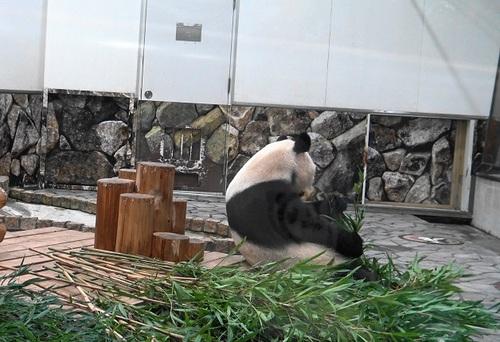 良浜に遅れて登場した後、竹のお稽古に励む結浜(2).jpg