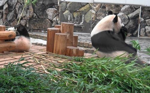 良浜に遅れて登場した後、竹のお稽古に励む結浜(28).jpg