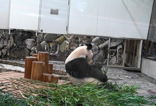 良浜に遅れて登場した後、竹のお稽古に励む結浜(3).jpg