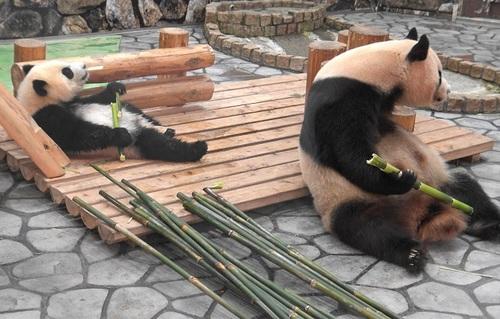 良浜の側で竹のお稽古に励む結浜(12).jpg