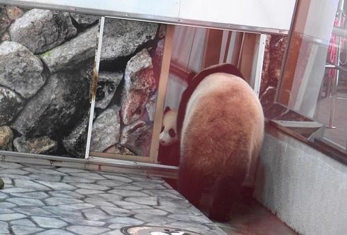 良浜の収納のジャマをする結浜(16).jpg
