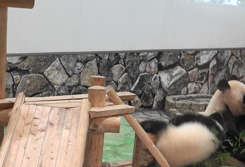 良浜の竹を取りに行く結浜(5).jpg