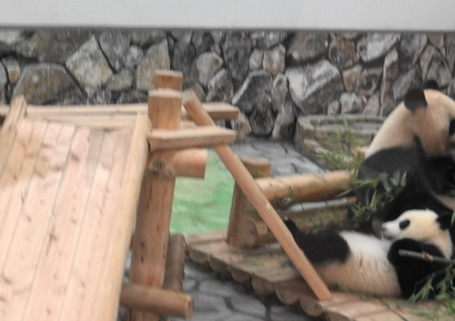 良浜の竹を取りに行く結浜(6).jpg