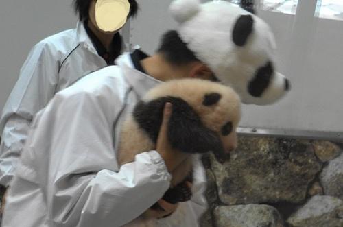 赤ちゃんパンダバイバイパレード2(10).jpg