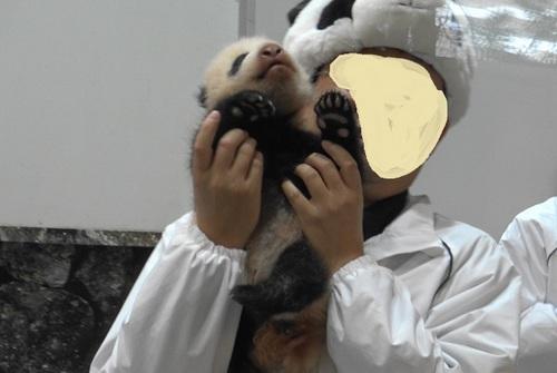 赤ちゃんパンダバイバイパレード2(11).jpg