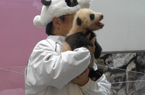 赤ちゃんパンダバイバイパレード2(15).jpg