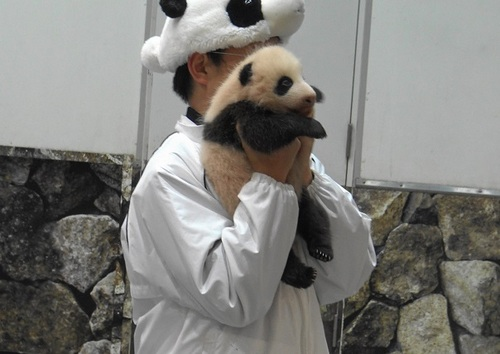 赤ちゃんパンダバイバイパレード2(16).jpg
