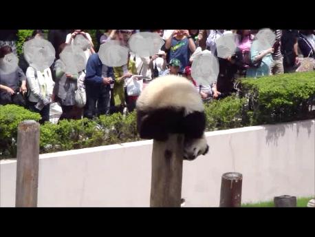 2011年5月陽浜柱上る13.png