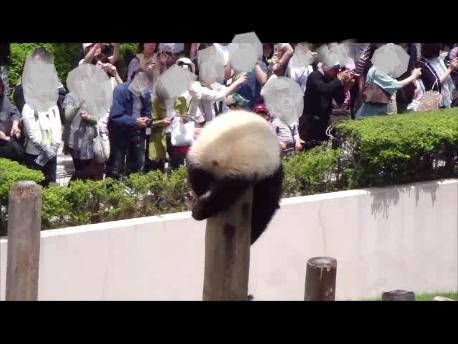 2011年5月陽浜柱上る14.png