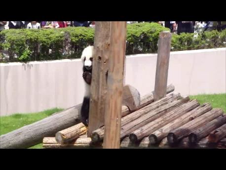 2011年5月陽浜柱上る22.png