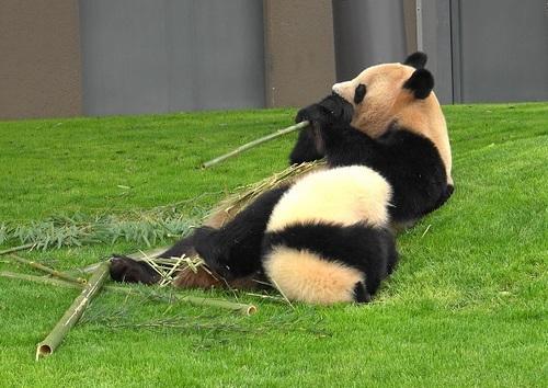 mission co-panda~ママの竹を強奪せよ♪~(41).jpg